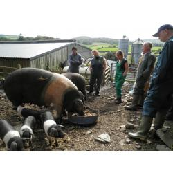 1 Day Pig Keeping Course