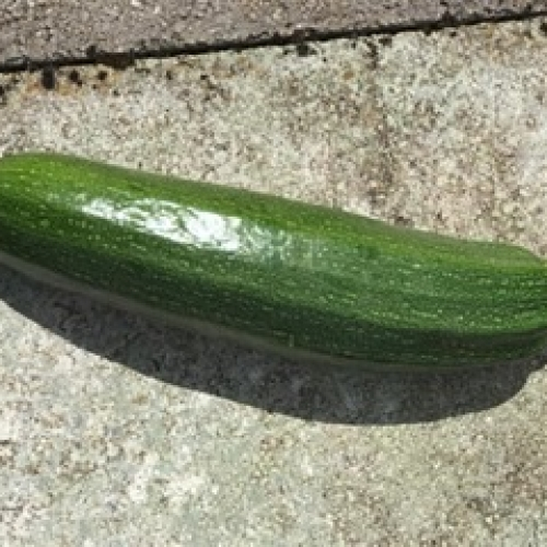 super large Courgette