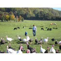 Free Range Traditional White Turkey