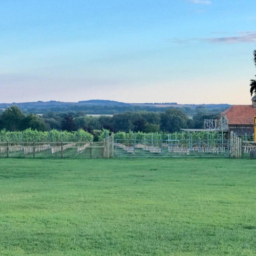 Signature Vineyard Walk & Wine Tasting