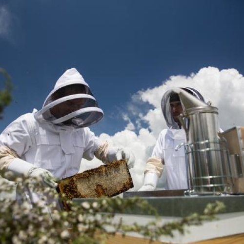 Beekeeping experience afternoon  - VIP Private hive tour