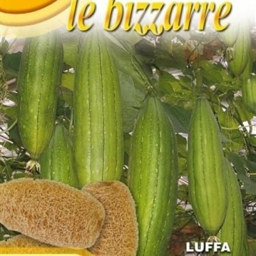 Franchi - Luffa, Bizzarre Loofah