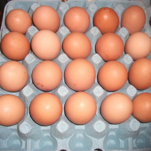 Extra large Free range hen eggs.