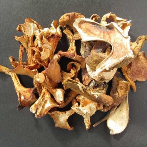 Wild harvested dried mushrooms /b