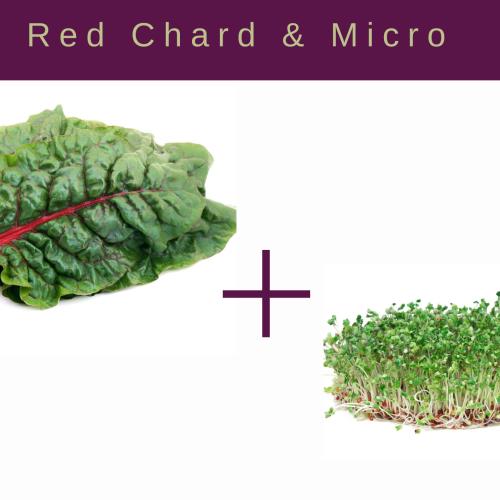 Red Chard and Microgreens