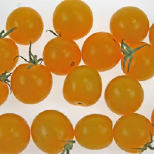 Cherry Tomato /T