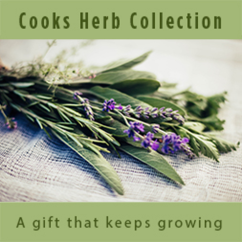 Cooks-  Herbal Plant Collection