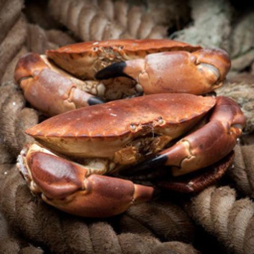 Crab Meat - Brown - frozen