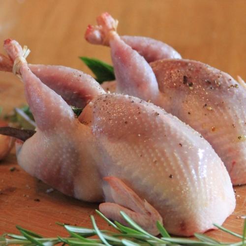 Standard size quail X 14
