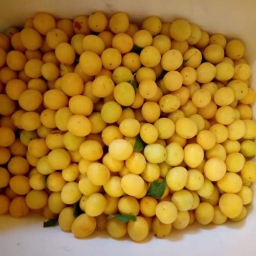 Yellow Cherry Plum Jam 300g