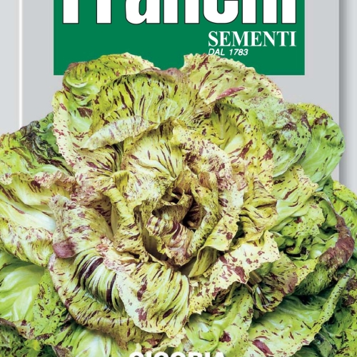 Franchi Chicory of Castelfranco