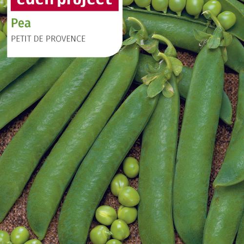 Franchi Pea de provence