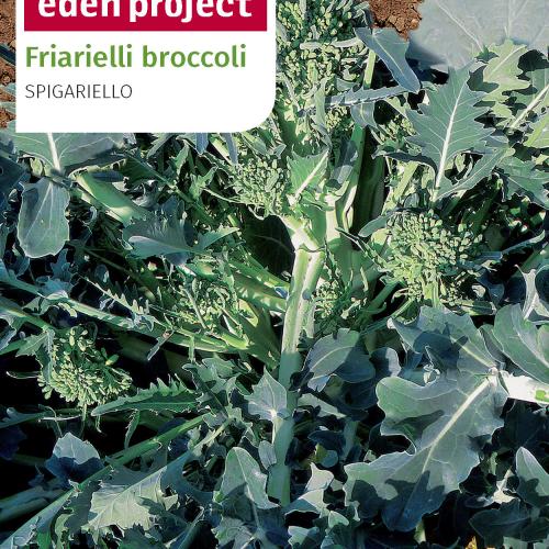 Franchi - Eden Project Friarelli Broccoli Spigariello