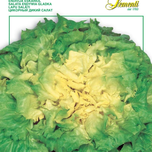Franchi - Escarole Lettuce Gigante of Bergamo