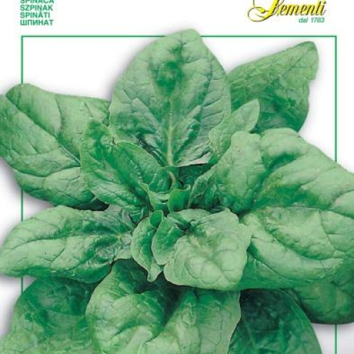 Franchi - Spinach Viroflay *Endangered variety*