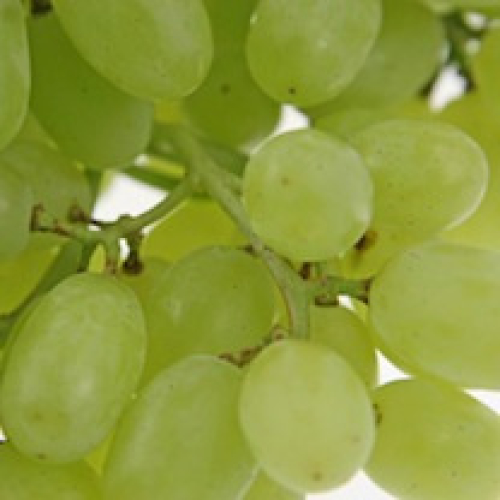 GRAPES SEEDLESS /T