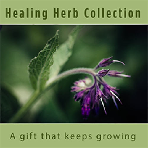 Medicinal-  Herbal Plant Collection