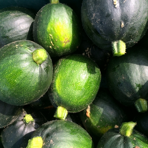 Gem squash softer skin NOT READY until mid AUGUST 2018