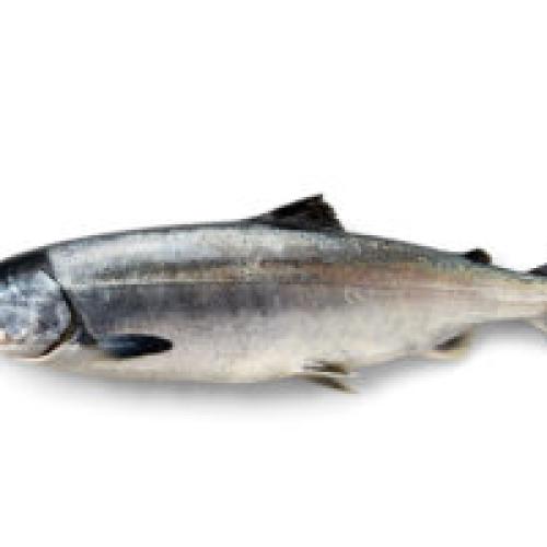 Wild Alaskan Keta Salmon 260g