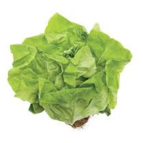 Lettuce Cornwall