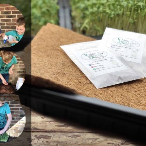 Grow your own Kits - microgreens: Little Farmer