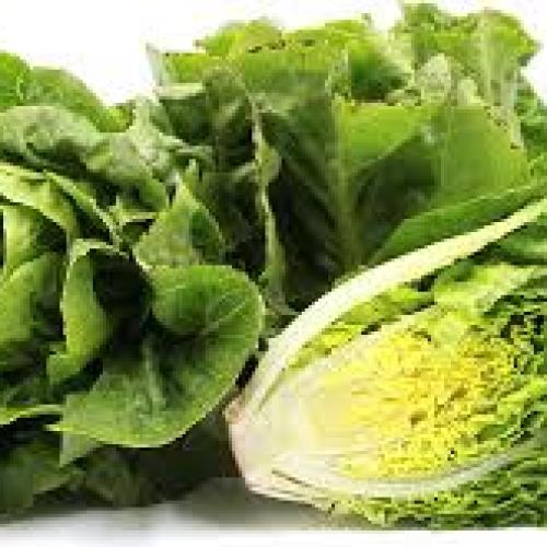 Little Gems lettuce