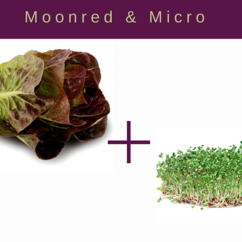 Moonred Lettuce and Microgreen