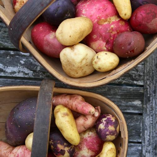 Mixed Box Special Potatoes