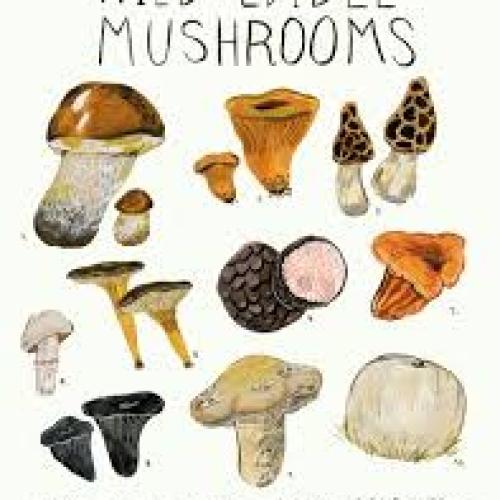 Mushrooms /t