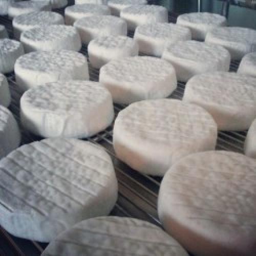Pexommier 9cm Yorkshire Brie (Certified Organic)