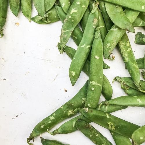 Peas - in pods