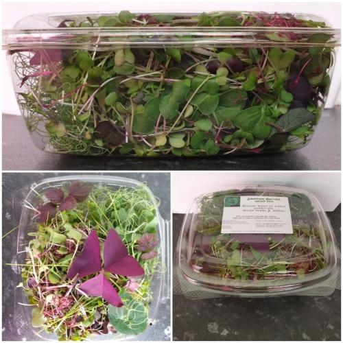 Microgreens Salad Mix