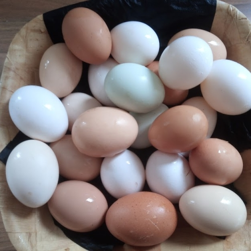 EGGS BY POST Fresh Free Range Organic GMO and Soya Free Mixed Eggs from Cornwall