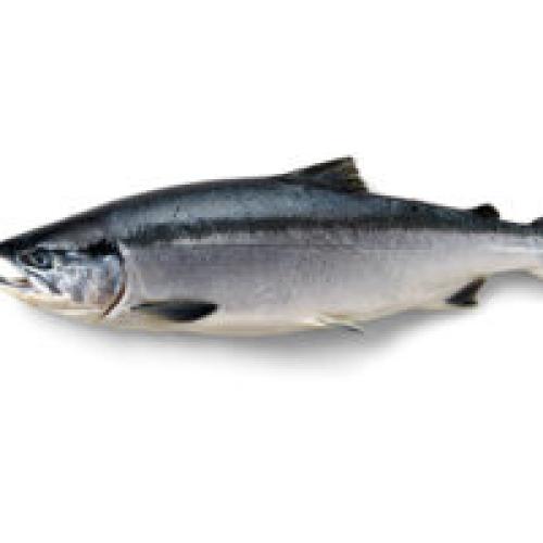 Wild Alaskan Sockeye Salmon 260g