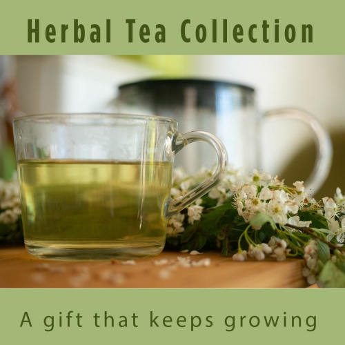 Grow Your Own Herbal Tea Plant Collection