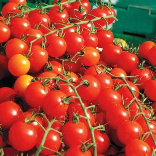 Tomato 'Sweet Million' F1