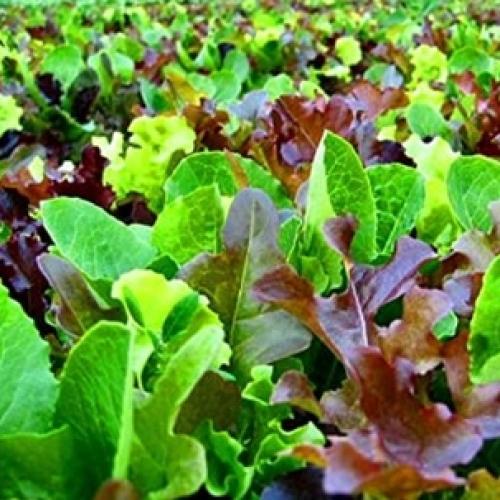 Organic Salad Bag L