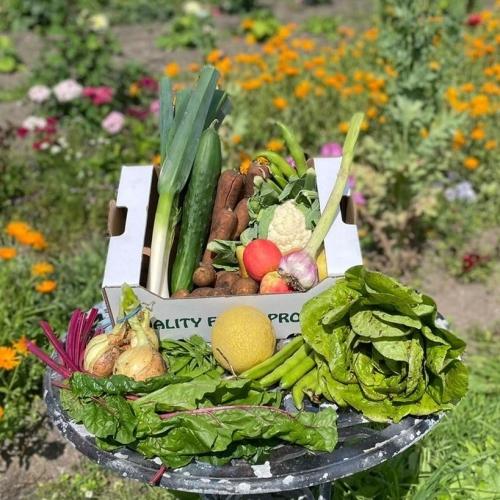 Vegetable & Fruit & Salad Box
