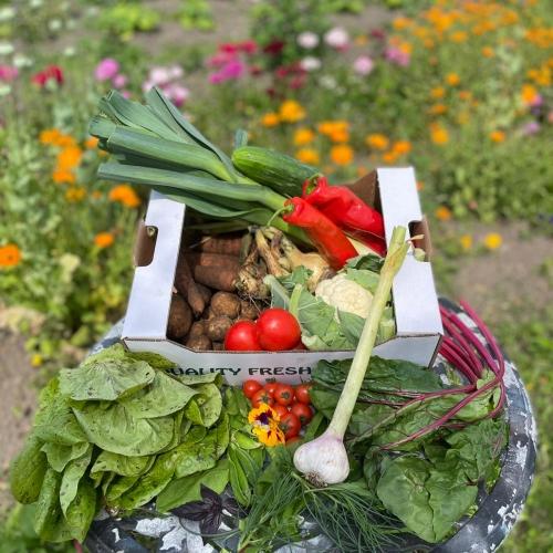 Salad & Vegetable Box