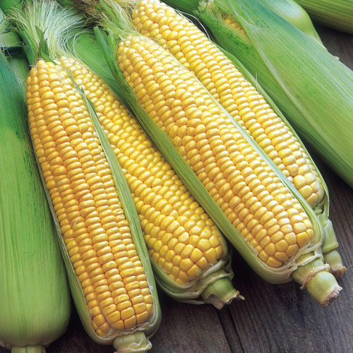 Home Grown Sweet Corn