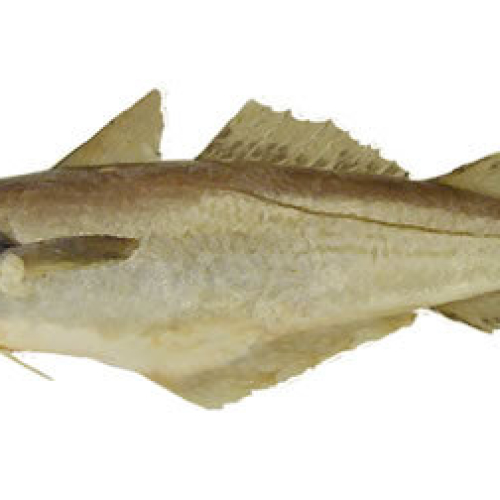 SMOKED WHITING frozen